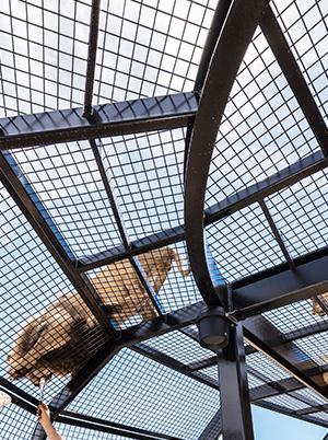 the Lions at Monarto Zoo 360 Experience
